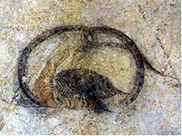 キトラ古墳壁画の玄武